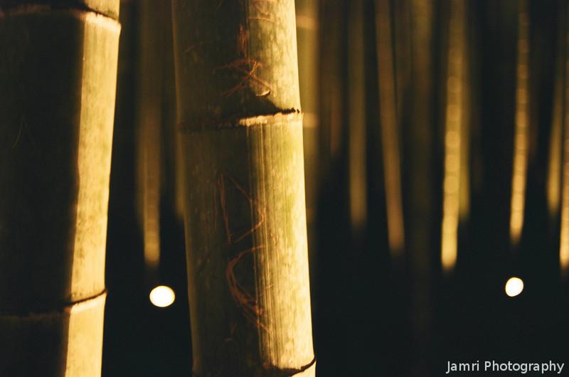 Bamboo at Night.<br /> Note Film Shot: Nikon F80 + Nikkor 35 f/2 + Fujicolor PR400