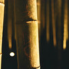 Bamboo at Night.<br /> Note Film Shot: Nikon F80 + Nikkor 35 f/2 + Fujicolor PR400