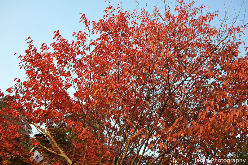 An explosion of red.
