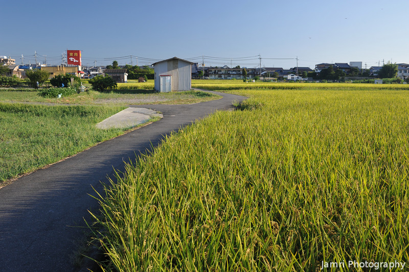 Early Morning at the Rice Fields