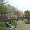 Spring at the Park.<br /> Osaka Castle Park that is!
