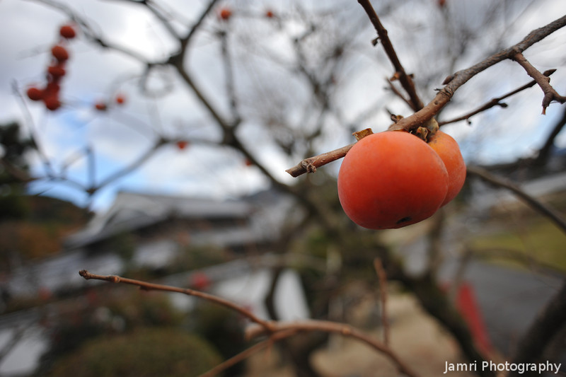 Fruit of the Season.<br /> ...persimmon.