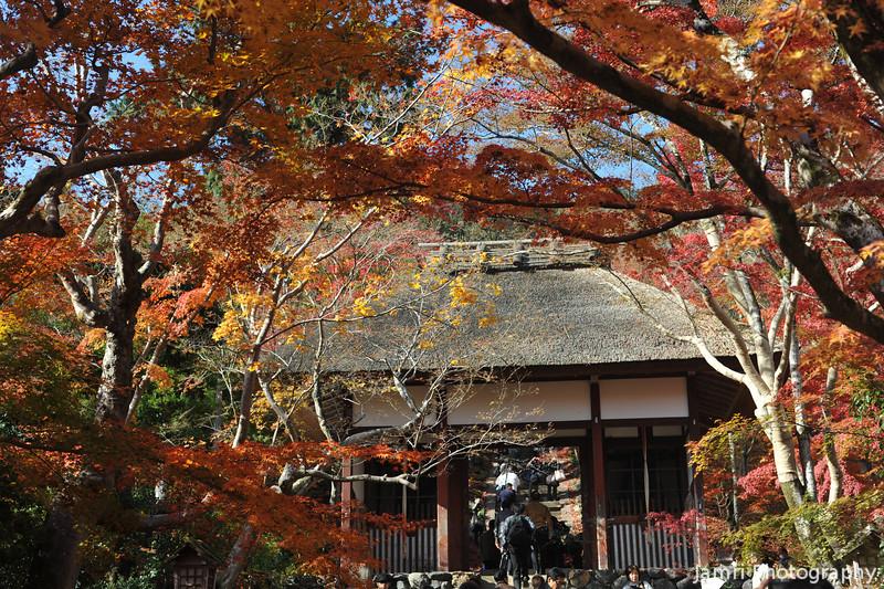 Autumn Tunnel.<br /> At Jojakko-ji (Jojakko Temple), Arashiyama, Kyoto.