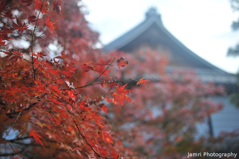 Red Leaves and Temple Roof.