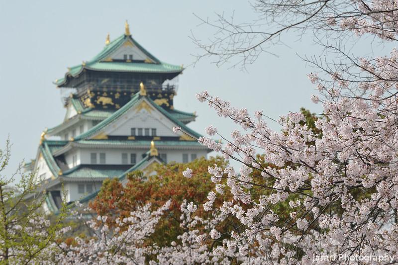 Behind the Sakura.<br /> Osaka Castle.