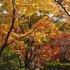 Autumn Display.