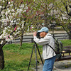 Capturing the peach blossoms.