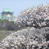Shallow Focus at Osaka Castle.