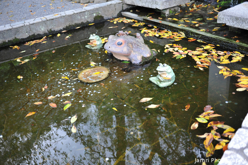 Frogs in a wishing pond.<br /> At Tenryu-ji, Arashiyama, Kyoto.