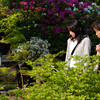 Watching the fish.<br /> Two ladies watch the fish swimming in a pond at Mimuroto-ji (a Buddhist temple) in Uji, Kyoto-fu.