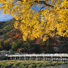 The Colours of Autumn at Arashiyama.