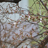 The first flowers appear.<br /> On the Sakura across the road from my house.