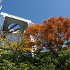 From behind the Autumn Foliage.<br /> The Umeda Sky Building.