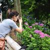 Emi Photographing Hydrangeas.<br /> At Youkoku-ji (a Buddhist Temple) in Nagaokakyo.