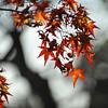 Rusty Leaves.
