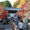 At the Entrance of Komyo-ji (a Buddhist Temple).<br /> Komyo-ji in Nagaokakyo, is famous around Kansai for it's autumn colours. Thousands of people come here during Momiji (Maple) Colour Change Season.