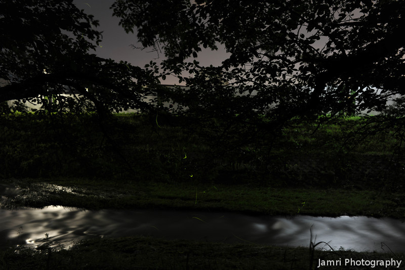 Hotaru season begins.<br /> View at Large Size to see some Hotaru (fireflies) in the centre of the image. Thank you to Mr K. for the loan of the strong tripod (my current one is not strong enough for the weight of my D700, so I'm only using it with my F80 now-a-days).