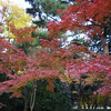 Autumn Colours.<br /> Photo by Ritsuko.