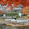 Boats Framed by a Maple.