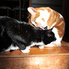 Grooming my brother.<br /> Our cats Lucy and Linus.
