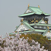Towering over the tree tops.<br /> Osaka Castle.