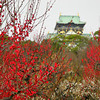 Red Ume and Osaka Castle.