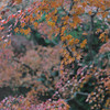 Looking down on to Orange Leaves.