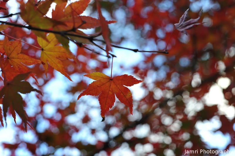 That Autumn Feeling.