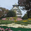 Chrysanthemums and the Castle.<br /> Osaka Castle.