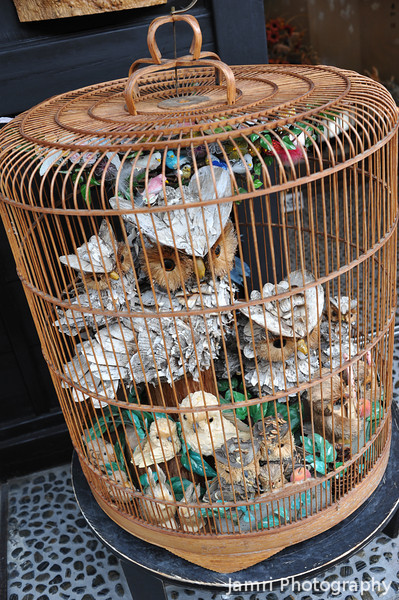 Owls in a cage.<br /> In Takayama, Gifu Prefecture, Japan.
