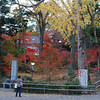 Yellow and Red.<br /> Ichou (Ginkgo) and Momiji (Japanese Maple).<br /> At Nagaoka Tenmangu Shrine, Nagaokakyo.