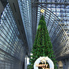 Big Tree.<br /> At the Kyoto Station Complex.