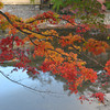 Maples over water.