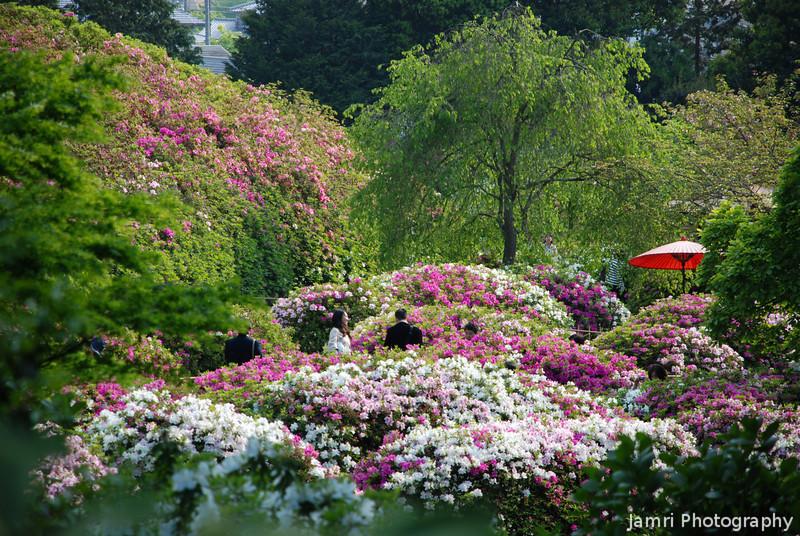 The Sunken Azalea Garden.