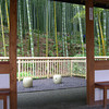 A place to view the bamboos.