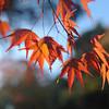 Suspended Autumn Colour.