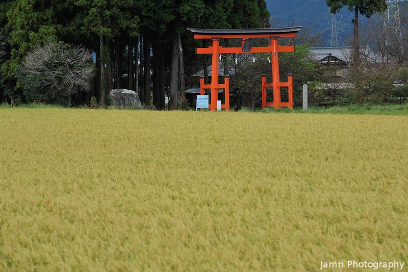 Looking Back Towards Tsuno Shrine.
