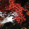Cascading Leaves.