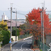 """The big red tree. Another view down the road from the railway foot bridge taken in between <A href=""""http://jamri.smugmug.com/Trains/Trains/"""">Trains</A>."""