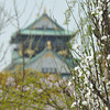 The Castle behind a Peach Blossom.<br /> Osaka Castle.