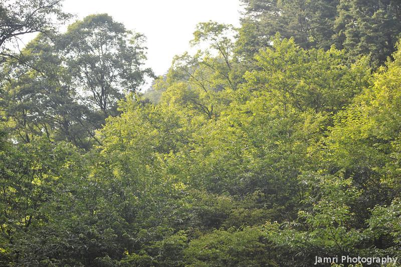 Backlit Trees.<br /> At Aburamu no sato (Abram's place) near Hida Furukawa, Gifu Prefecture, Japan.