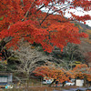 Red Maple and Boats.<br /> In Arashiyama, Kyoto.