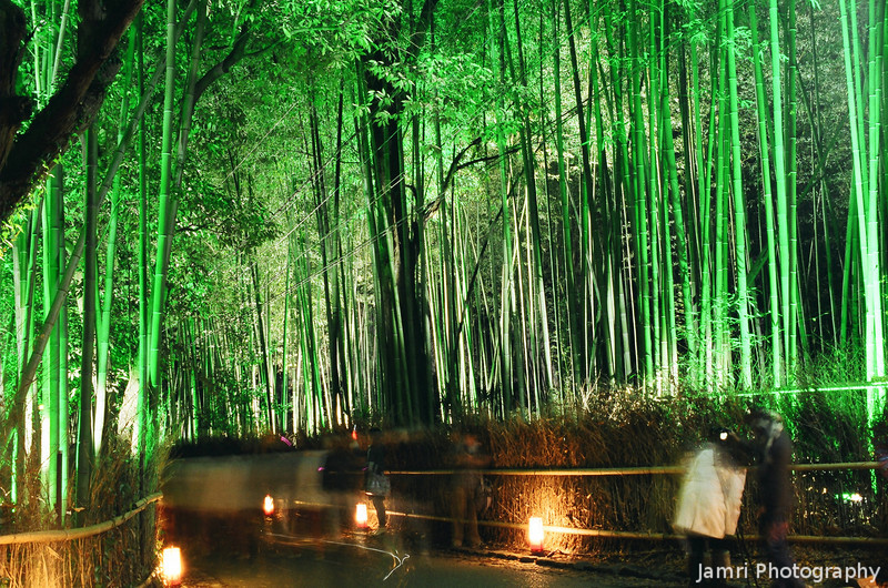 Walking in the Bamboo Forest Under Lights.<br /> In Arashiyama, Kyoto.<br /> Note Film Shot: Nikon F80 + Nikkor 35 f/2 + Fujicolor PR400