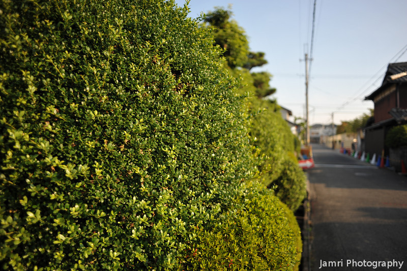 Along a hedge.