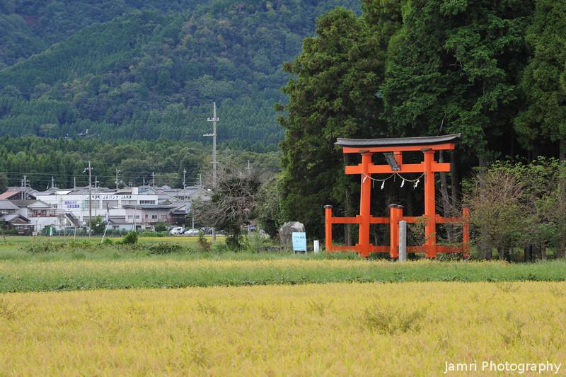 Rice Field, Torii and Mountains.<br /> Towards Tsuno Shrine, in Omi-Imazu, Shiga-ken, Japan.