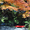 A red chair under the maple foliage.