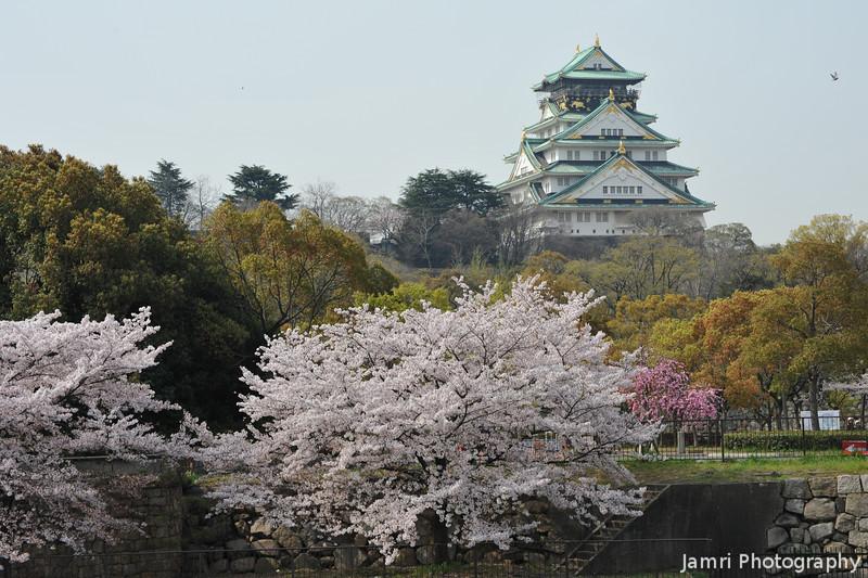Sakura's and the Castle.<br /> Osaka Castle.