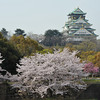 Sakura's and the Castle.<br /> Osaka Castle.