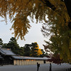 From Under the Big Ginkgo.<br /> In the Kyoto Imperial Palace Park.