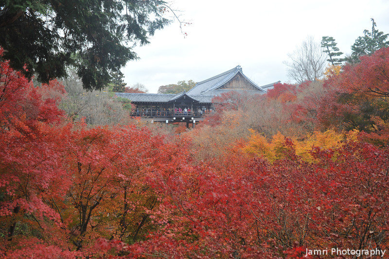 Massive Autumn Colour.<br /> At Tofuku-ji (Tofuku Temple) regarded as one of the best temples in Kyoto to see the maples.